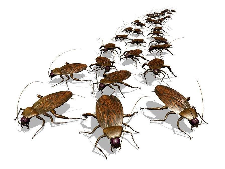 Fobia a las cucarachas