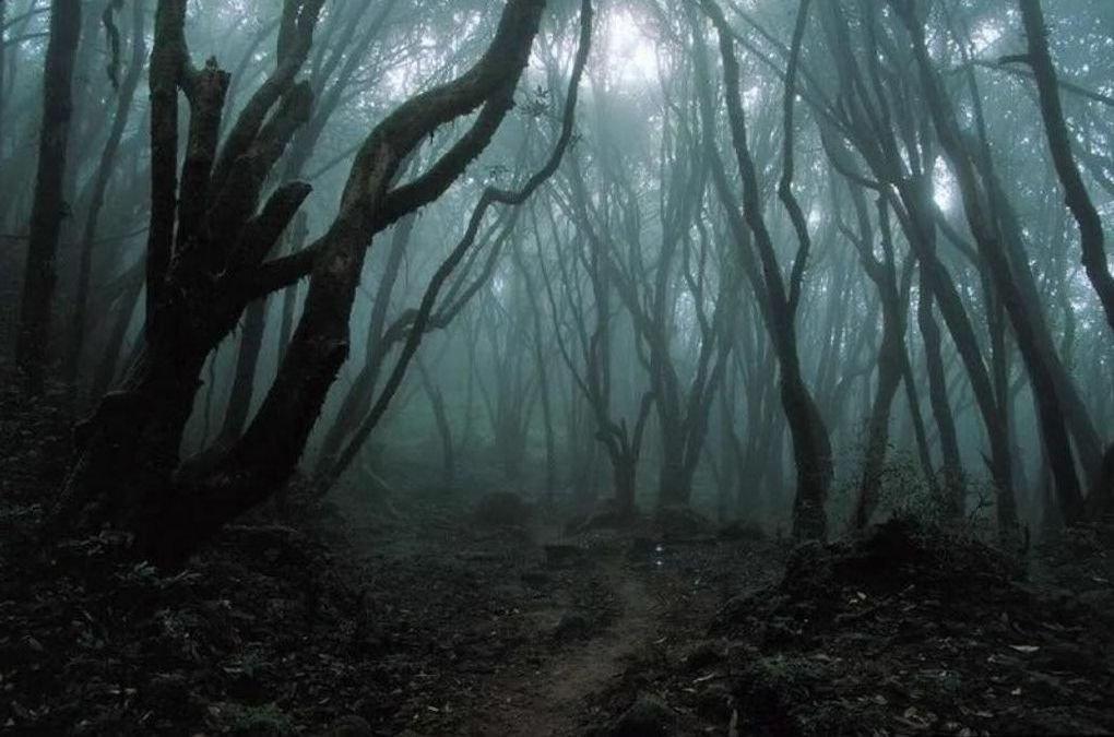 Fobia a los bosques