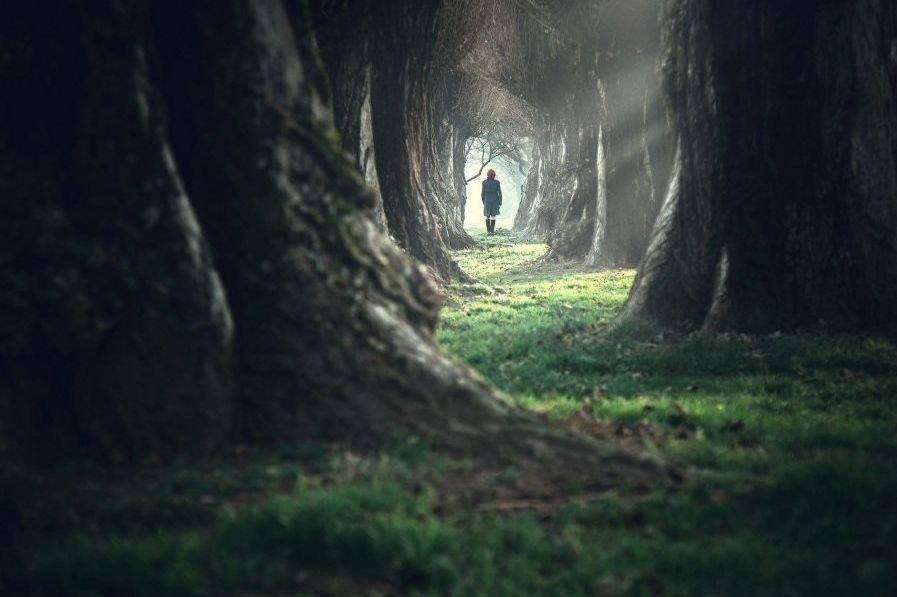 Miedo a los bosques