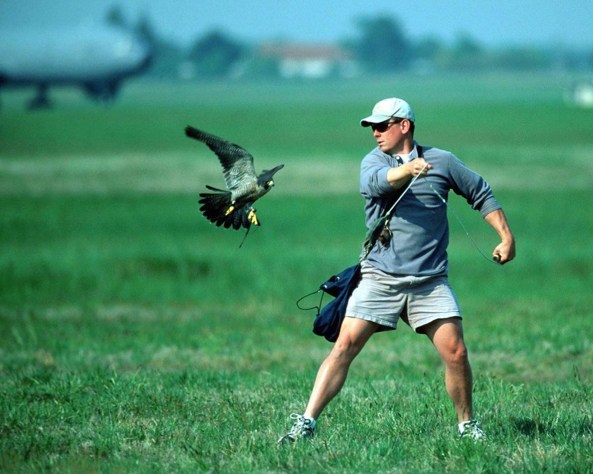 Miedo a los pájaros